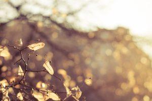 Psykomotorisk stressbehandling | Solar Plexus